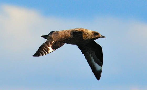 bonxie_1_westwaterford_17082011.jpg