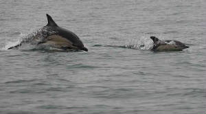 cdolphins_bunmahon_11122010_img_8215_small.jpg