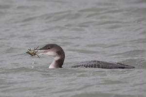 gnd_ballynacourty_15012012_dc_img_0483_medium.jpg