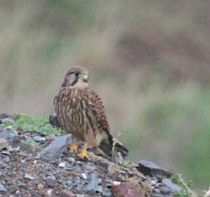 kestrel_watdump_12012012_img_0251_small.jpg
