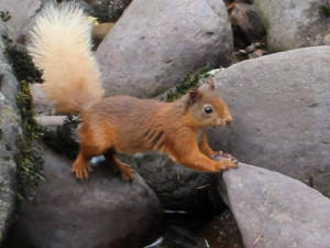 redsquirrel_25072011_2_.jpg