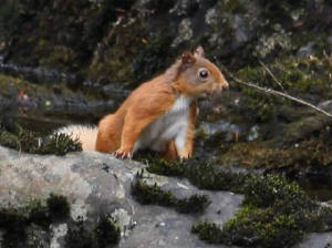 redsquirrel_25072011_3_.jpg