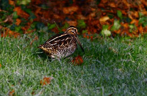 snipe_courthouse_08012010.jpg